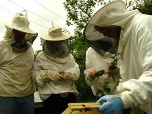 Les jardiniers intéressés par l'apiculture ont pu prendre quelques photos.