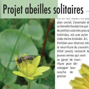 Projet abeilles solitaires