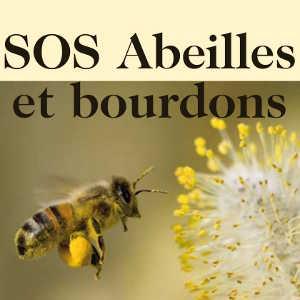 SOS Abeilles et bourdons