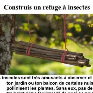 Construis un refuge à insectes