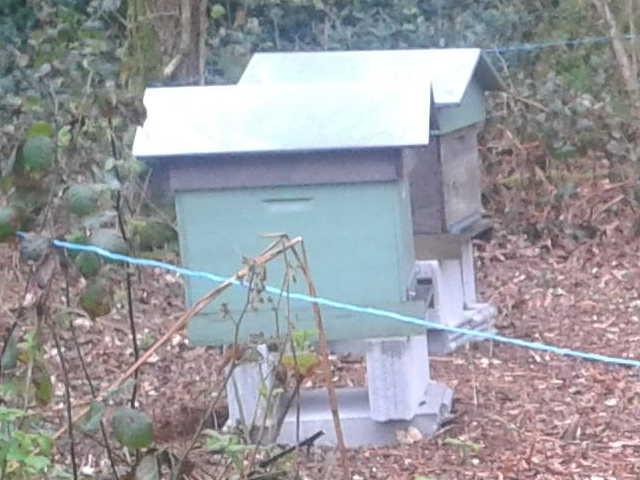 Les ruches de Murielle